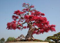 Bonsai Aesthetics | Bonsai Tree Gardener