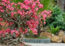 6 artistas de bonsái que deberías conocer