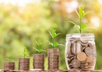 Una guía para principiantes para iniciar un negocio de bonsáis