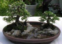El arte de Bonkei: Un paisaje de Bonsái