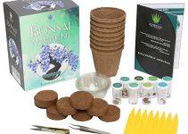 Mejor kit de inicio de bonsái | Jardinero de árboles de bonsái