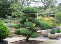 Lo básico de la Niwaki japonesa | Jardinero de árboles de bonsái