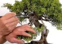 El mejor kit de poda de bonsái | El jardinero del árbol de bonsái