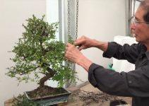 Mejor Rollo de Herramientas para Bonsái | Jardinero del Árbol de Bonsái