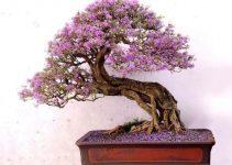Mejores luces de cultivo para su bonsái