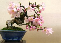 ¿Qué significa y simboliza el bonsái?