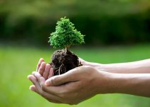 Cómo cuidar su bonsái para que viva por cientos de años