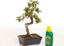 Cómo usar el fertilizante para cultivar su árbol de bonsái