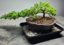 Humedad del árbol de los bonsáis / Bandejas de goteo