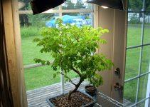 Cómo proporcionar iluminación a los árboles bonsái