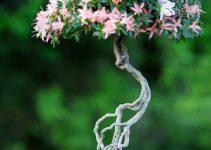 Luces LED de crecimiento para árboles bonsái