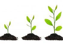 Cómo cultivar árboles de bonsái a partir de semillas