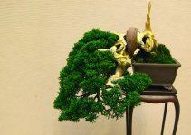 ¿Por qué los árboles de bonsái se transmiten cada generación
