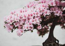 Árboles Bonsái que pueden crecer con la luz interior