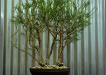 Guía para el cuidado del árbol de bromelias (Bromeliaceae)