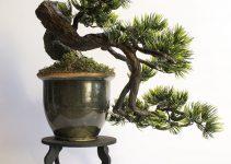 Estilos de árboles Bonsái | Jardinero de árboles Bonsái