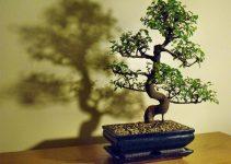 Guía de cuidados del árbol del olmo chino (Ulmus parvifolia)