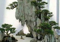 Penjing chino: Sus influencias en el bonsái japonés