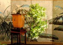 La importancia de la exhibición de los bonsáis