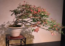 La práctica de exhibir árboles de bonsái