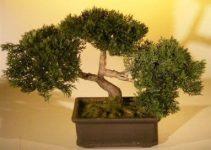 Árboles Bonsái artificiales | Jardinero de árboles Bonsái