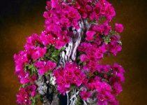 Árboles Bonsái en flor | Jardinero de árboles Bonsái