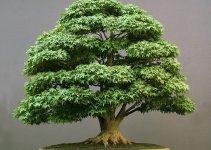 Cómo mantener las hojas del árbol de bonsái pequeñas