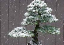 Cómo proteger el bonsái en invierno