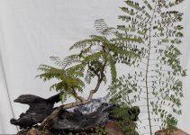 Cómo dar forma a un árbol de bonsái
