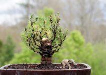 Cómo cortar el tronco de un árbol de bonsái