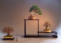 Cómo usar un soporte para exhibir su bonsái Shohin
