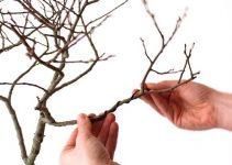 Cómo usar el alambre de bonsái de aluminio