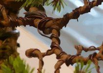 Cómo usar el alambre de cobre de los bonsáis