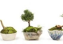 Cómo usar el calibre de alambre para cultivar bonsáis