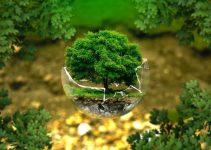 La estética japonesa y su influencia en la jardinería de los bonsáis