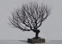 Escultura de árbol de alambre Árboles Bonsái