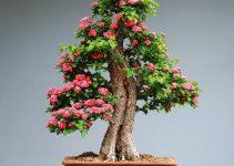 Pros y contras de mantener los bonsáis en casa: científica y espiritualmente