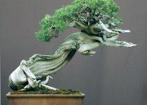 Los 9 árboles de bonsái más hermosos