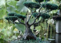 La ciencia y el arte detrás de la tradición japonesa del bonsái