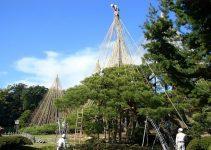 Belleza y función en la preservación de árboles y arbustos: La técnica japonesa Yakitsuri