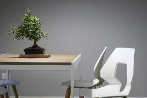 Los tres tipos de abanicos de bonsái