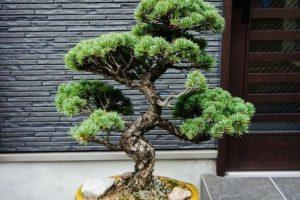 Cosas que hay que buscar al elegir los juegos de herramientas de bonsái