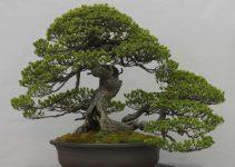 Herramientas necesarias para doblar las ramas del bonsái