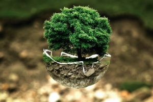 Dónde comprar tierra de bonsái